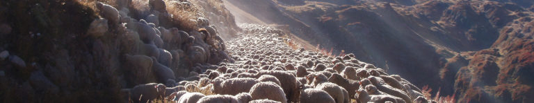 photo brebis chemin transhumance serrees
