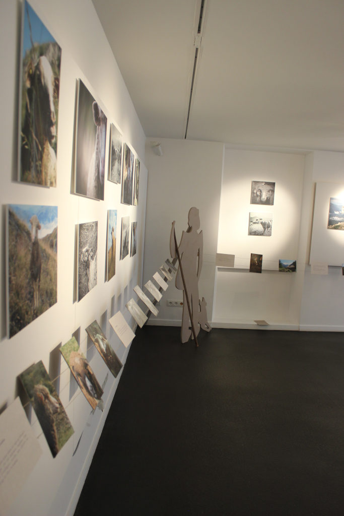 Photographie de l'exposition portraits de brebis 2 (carton)