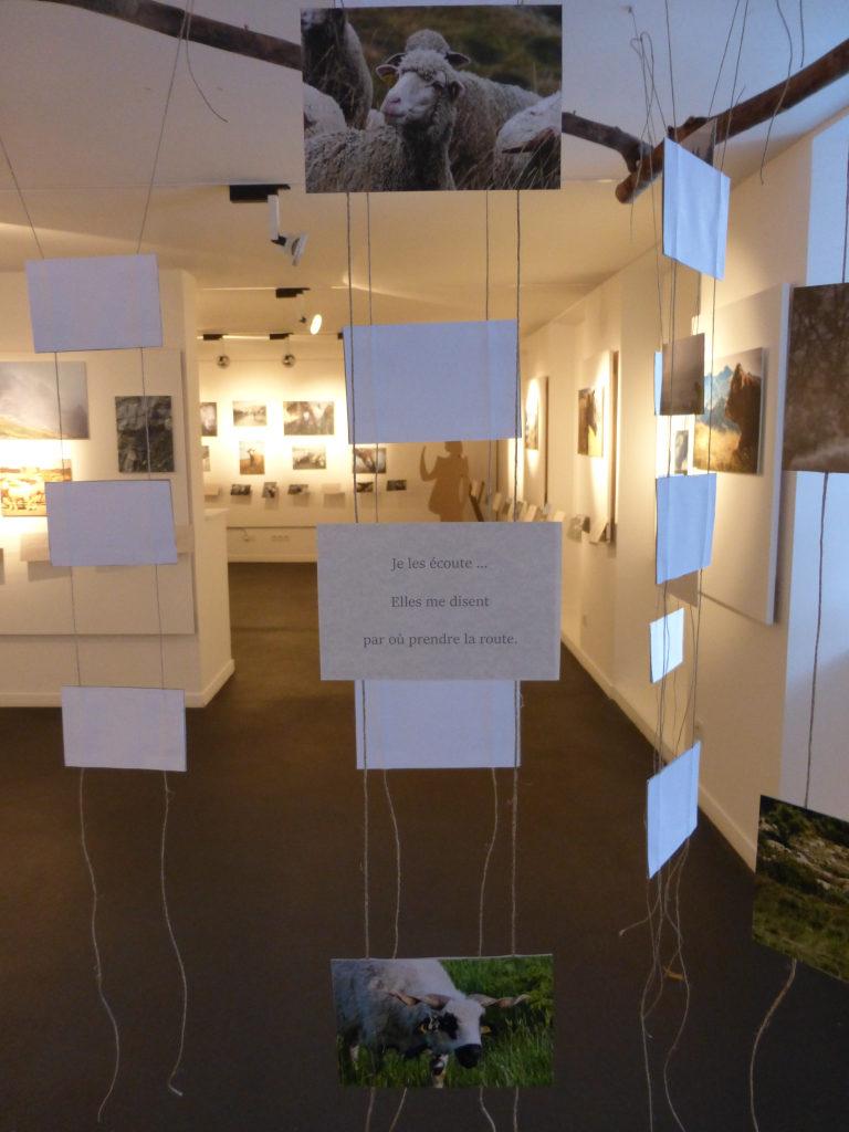 Photographie de l'exposition portraits de brebis 3 (texte)